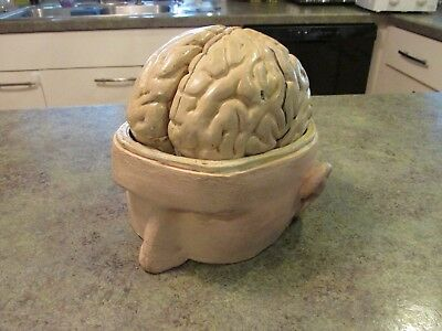 Antique Anatomy Human Brain Skull Anatomical Model Bock Steger 1880s Germany