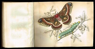 1852 Antique Book - Natural History of Exotic Moths w. 34 Hand-Col. Engravings