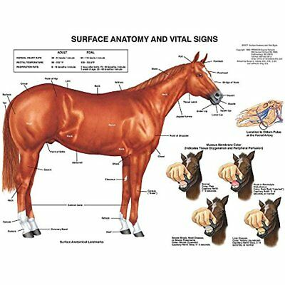 Charts & Posters Equine Surface Anatomy Chart Horse