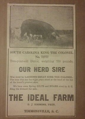 1917 South Carolina King The Colonel No 72777 Hog Boar Ad Timmonsville, SC Sire