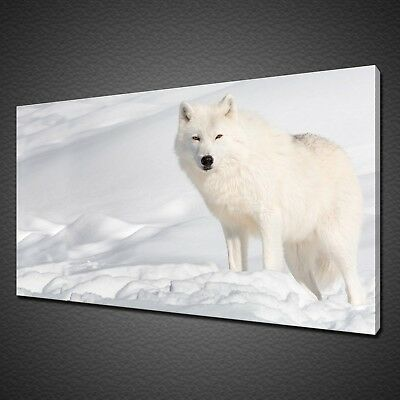 Arctic White Wolf Canvas Picture Print Wall Art Home Decor