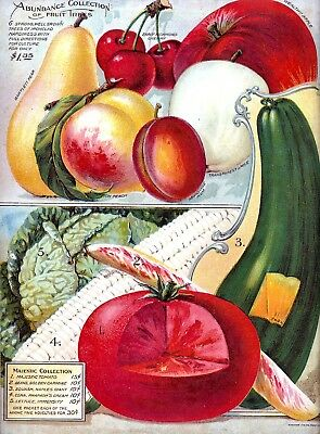 Abundance Collection Vintage Fruits Seed Packet Catalogue Advertisement Poster