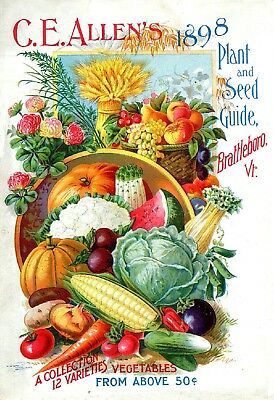 Allen Collection Vintage Fruits Seed Packet Catalogue Advertisement Poster