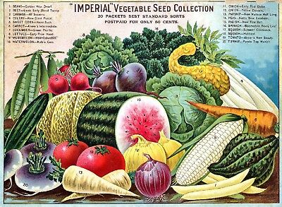 Alneer Collection Vintage Fruits Seed Packet Catalogue Advertisement Poster 4