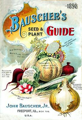 Bauscher Collection Vintage Fruits Seed Packet Catalogue Advertisement Poster 1