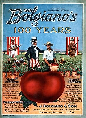 Bolgianos Collection Vintage Fruits Seed Packet Catalogue Advertisement Poster 1