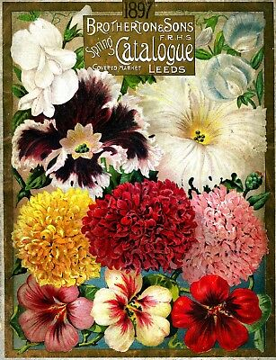 Brotherton Collection Vintage Fruits Seed Packet Catalogue Advertisement Poster