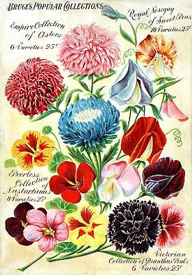 Bruce Collection Vintage Fruit Seeds Packet Catalogue Advertisement Poster 2