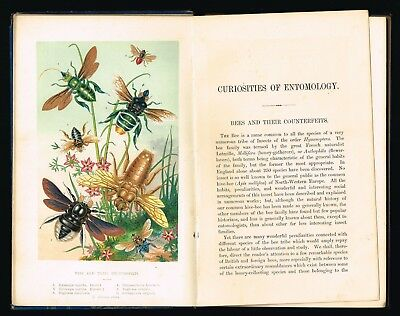 1871 Book - Curiosities of Entomology, Insects, Beetles w. 10 Color Lithographs
