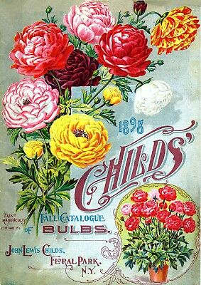 Childs Collection Vintage Fruit Seeds Packet Catalogue Advertisement Poster 4