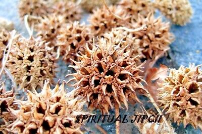 7 SACRED BURR PODS Wicca Pagan WITCHCRAFT SANTERIA Hoodoo NEW AGE SPELLS