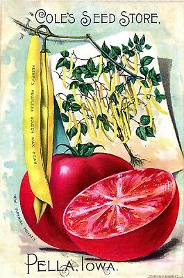 Coles Collection Vintage Fruit Seeds Packet Catalogue Advertisement Poster 5