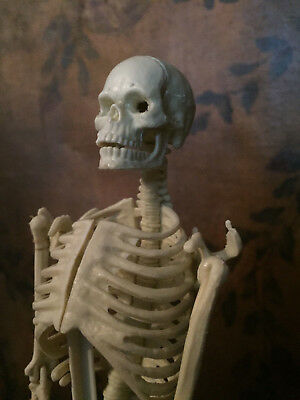 Vintage  Skeleton Anatomical Model In Its Original Case