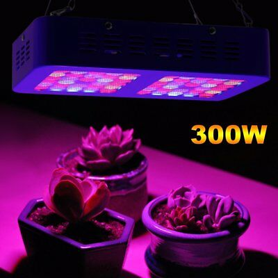 LED Grow Light 300W LED Cultivo Lamparas de Led para Hydroponic Interior Plantas