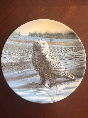 The Snowy Owl Collectible plate