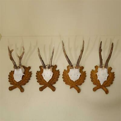 4 Pieces Beautiful Deer Antlers on Trophy Shields CARVED ANTLER TROPHY SHIELD