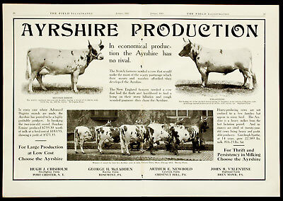 1915 AYRSHIRE DAIRY COWS Farm Cattle Sale 2-Page PHOTO Vtg Agriculture PRINT AD