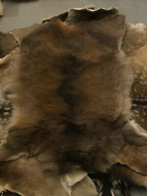 Roe Deer Skin, fur, rug, hide, taxidermy, fly tying, Chevreuil, capriolo B-grade