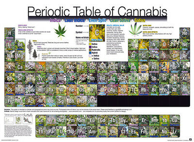 Official Periodic Table Of Cannabis Maxi Poster 91.5 x 61cm Weed Marajuana Skunk