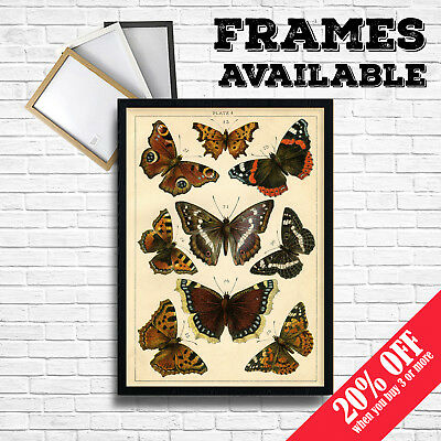 Vintage Butterfly Print Poster Wall Art , Retro Mid Century Home Cafe Pub Decor