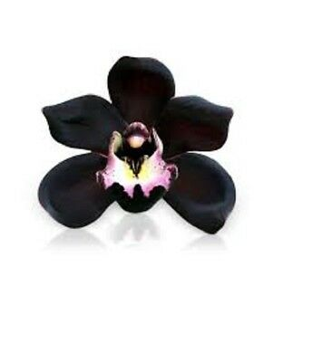 Black Orchid Premium Fragrance Oil - Candles / Soaps / Diffusers - 10 ML