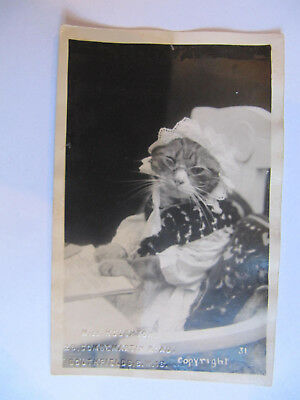 Dressed Up Cat - Vintage Real Photo Postcard (Embossed with Name & Address)