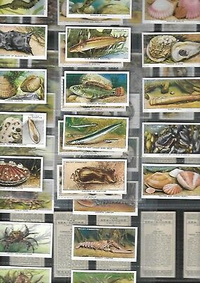 Full  Set 50 The Sea Shore 80 Yrs Old Set By Wills   Cigarette Cards
