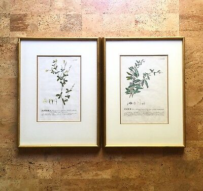Rare Pair of Colored Botanical Engravings from Plantae Selectae, 18th C. German
