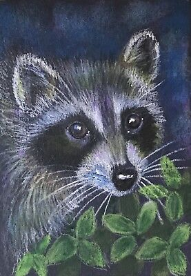 ACEO Orig. Young Forest Raccoon Wildlife Nature Animals Impressionism