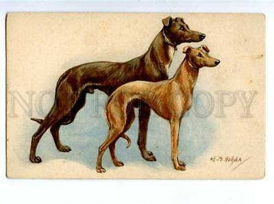 156509 HUNT Whippet GREYHOUND by HOLLYER Vintage PC