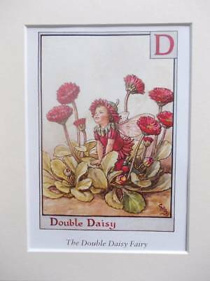DOUBLE DAISY Flower Fairy, Cicely Mary Barker in 10in x 8in Ivory Mount 8 x 6 Pr