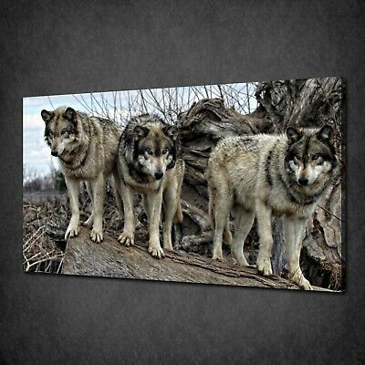 Wolves Wildlife Canvas Picture Print Wall Hanging Art Home Decor Free Delivery