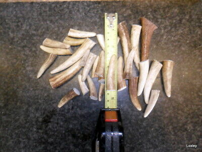 Red Stag Horn Tips, Prongs, For Walking Stick Making Crafts Arts Thumb Sticks