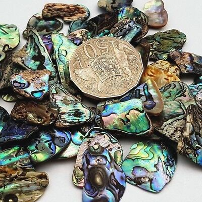 New Zealand Paua Shell - 50 grams