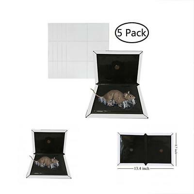 Outdoor Dcor KChoies Pack Thickened Extra Strength Large Mice Rats Insects Flat