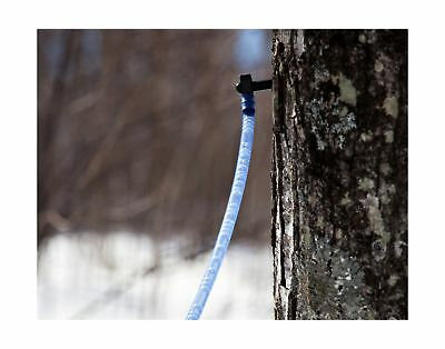 10 Maple Syrup Tree Tapping Kit - 10 Taps + 2-Foot Drop Lines + Includes Sap ...