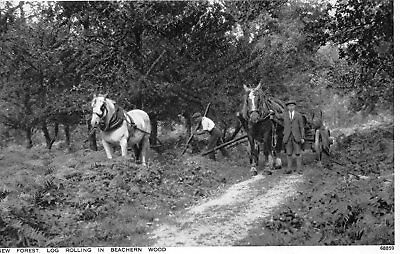 Old Photochrom Postcard 1936 - New Forest Horses Log Rolling In Beachern Wood