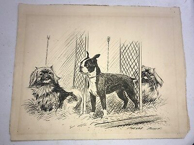 "RARE Original MORGAN DENNIS 1892-1960 Illustration Signed 14.5x 11"" Chihuahuas"