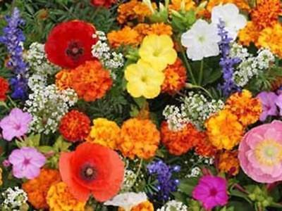Deer Resistant Wildflower Mix 400+ Seeds, or 1 Gram... Buy Two & We Ship 3!  S18
