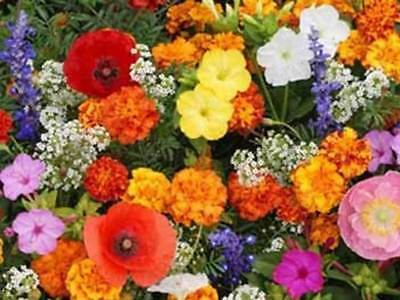 Deer Resistant Flower Mix Seeds by Zellajake, Many Sizes Bees Butterflies #18