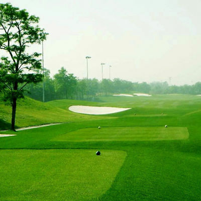 10000pcs Turf Grass Seeds Golf Evergreen Lawn Seeds Soccer Fields Ornament