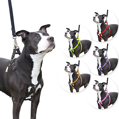 Step in Dog Harness Nylon Light Padding Adjustable for Easy Fit by CuteNfuzzy
