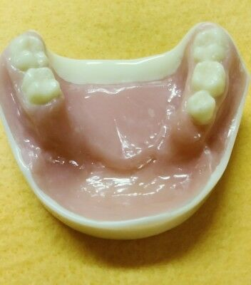 Mandibular  DENTAL DEMONSTRATION TEACHING MODEL Lab Dentist & Oral Surgeon