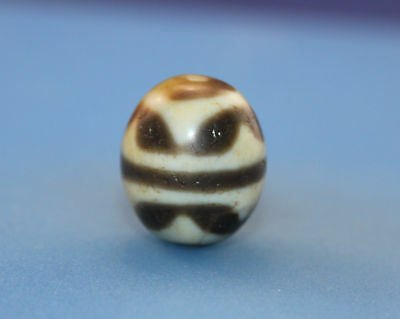 """20*17mm Antique dzi Agate old """" Tiger tooth """" Bead from Tibet **Free shipping**"""