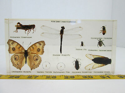 POM 2687 Insect Collection Bugs Entomology Insects Display Plastomount School T