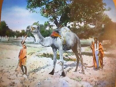 "ANTIQUE MAGIC LANTERN SLIDE Egyptian, Camel farming,Arabian  3.25"" X 4"" vintage."