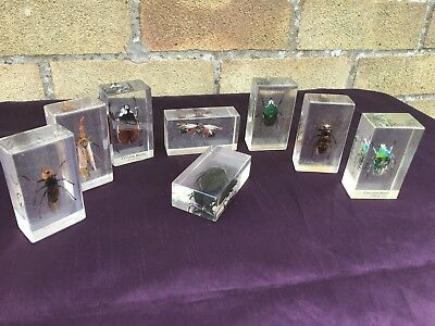8 Beetles, Insects, Bugs Taxidermy In Acrylic Glass Block Real Life Bug