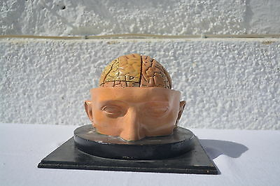 Antikes Hirnmodell Bock Steger Lips circa 1900 Gips Anatomical Brain Model