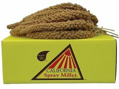 California Golden Spray Millet for Birds - Breeder Special 5-lb box on sale