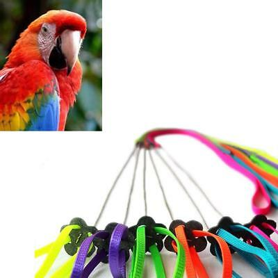 Harness Bird Leash And Aviator Birds Pet Fred 6 Foot Easiest Safest Premier 1pcs